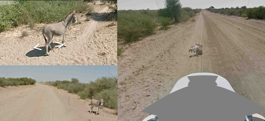 Google-street-car-kills-donkey