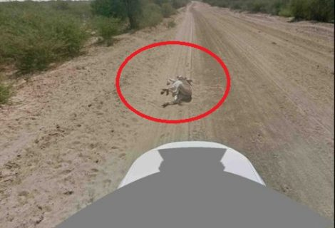 Google Denies Killing Donkey! Image Included