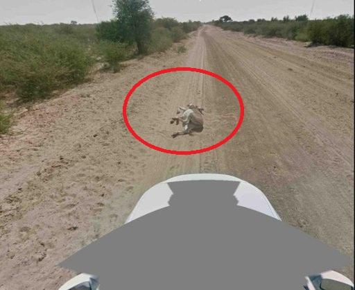 Google Denies Killing Donkey! Image Included