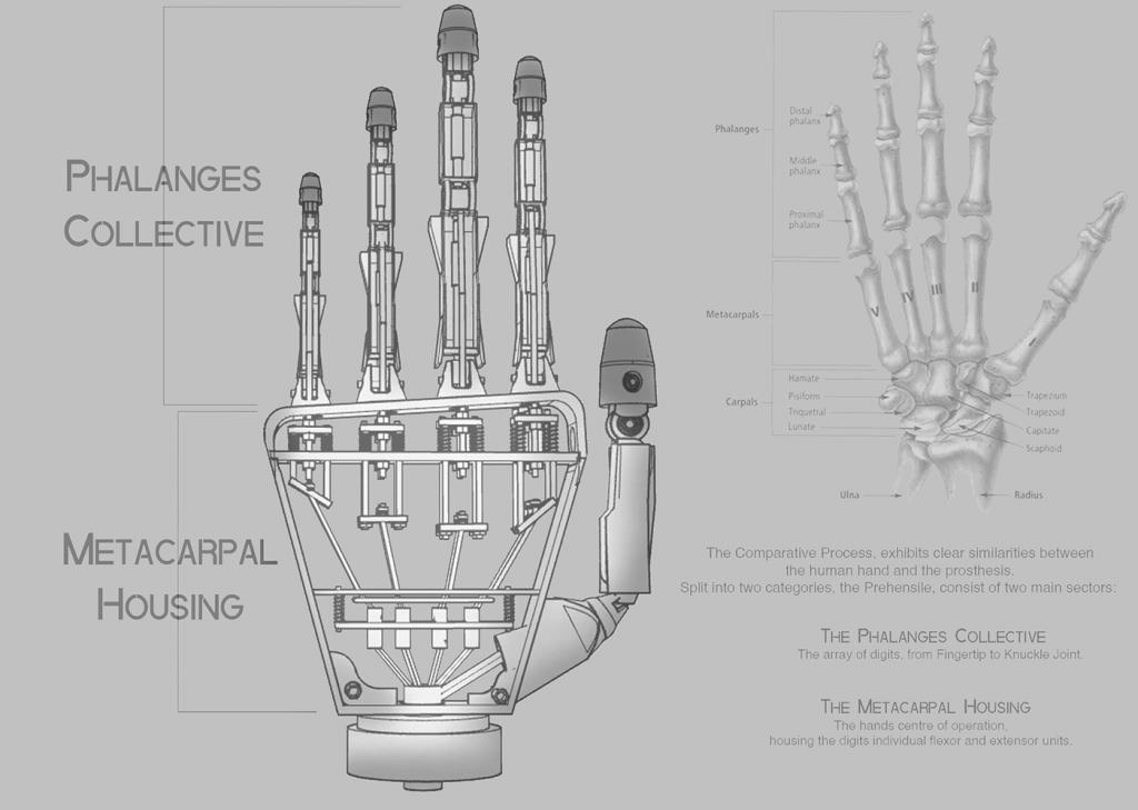 3D Printed Prehensile Hand - Phalanges Metacarpal