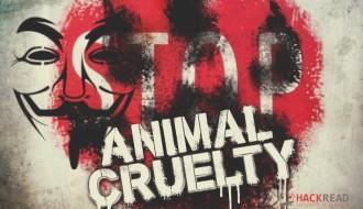 anonymous-bear-cubs-animal-cruelty
