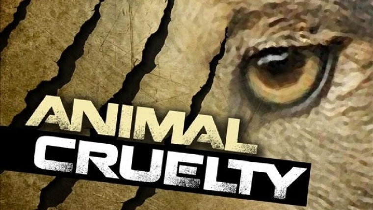 Man Charged with Animal Cruelty After Video Emerges on Facebook