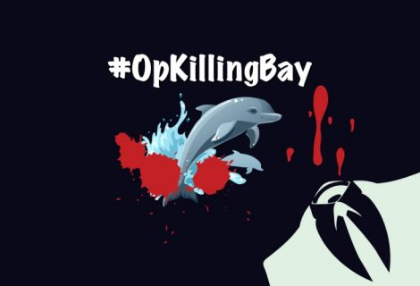 Anonymous Shut Down Japanese Airport Website Against Dolphin Slaughter