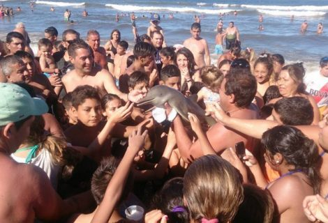 Selfie Crazy Tourists Responsible for Tragic Death of Rare Baby Dolphin