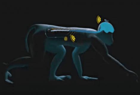 Wireless Brain Interface Can Make the Paralyzed Walk Again