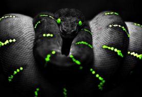 Nasty Mamba ransomware that encrypts entire hard drive resurfaces