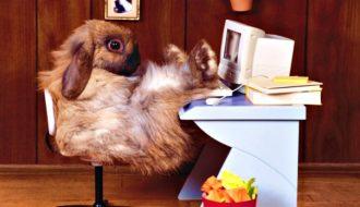 EternalRomance NSA Exploit a Key Player in Bad Rabbit Ransomware Mayhem